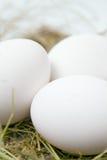 Oeufs blancs dans la paille Image stock