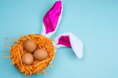 oeufs bruns dans un nid décoratif avec des oreilles de lapin sur un fond bleu vibrant image libre de droits