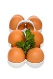 Oeufs bruns de poulet dans le conteneur avec le persil Photo libre de droits