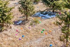 Oeufs colorés laissés tomber dehors Chasse d'oeufs : activité traditionnelle de famille le jour de Pâques Photos libres de droits
