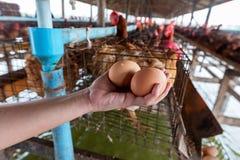 Oeufs crus des fermes de poulet images libres de droits