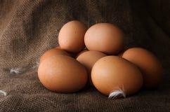 Oeufs crus frais de poulet Images libres de droits