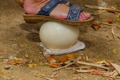 Oeufs d'autruche pour que les touristes tiennent Images stock