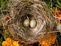 Oeufs d'emboîtement et d'oiseau entre les fleurs oranges Photographie stock
