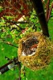 Oeufs dans l'emboîtement d'oiseaux images stock