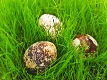 Oeufs dans l'herbe Image stock