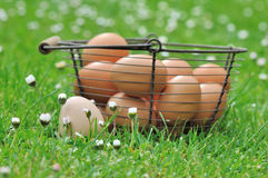 Oeufs dans l'herbe Photo stock