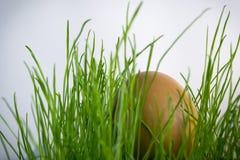 Oeufs dans l'herbe avec le soleil Photographie stock