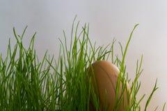 Oeufs dans l'herbe avec le soleil Images stock