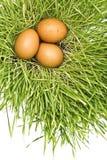 Oeufs dans l'herbe verte Images stock