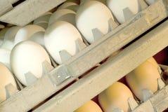 Oeufs dans l'incubateur Photographie stock