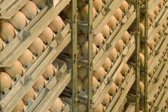 Oeufs dans l'incubateur Image stock
