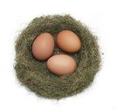 Oeufs dans le nid Photographie stock