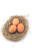Oeufs dans le nid Photo stock