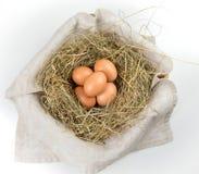 Oeufs dans le nid Photographie stock libre de droits