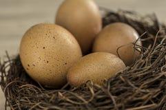 Oeufs dans le nid d'oiseau Photos libres de droits