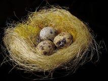Oeufs dans un nid photographie stock libre de droits