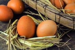 Oeufs de Brown en oeufs de poule de nid Photo libre de droits