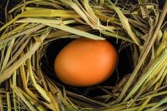 Oeufs de Brown en oeufs de poule de nid Images stock