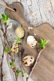 Oeufs de caille, branches vertes et planche à découper en bois de vintage Photos stock