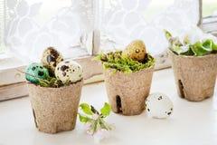 Oeufs de caille colorés de Pâques photos libres de droits