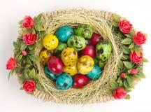 Oeufs de caille colorés de Pâques dans un panier en osier Image libre de droits