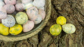 Oeufs de caille colorés sur un fond Photos libres de droits