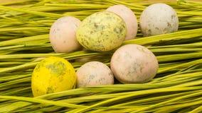 Oeufs de caille décorés de Pâques Images libres de droits