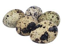 Oeufs de caille d'isolement Grande collection d'oeufs de caille d'isolement sur un fond blanc Photo libre de droits