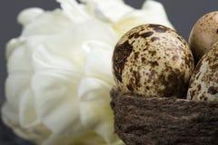 Oeufs de caille dans le nid Image stock