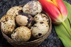 Oeufs de caille dans le nid image libre de droits
