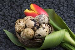 Oeufs de caille dans le nid photos libres de droits