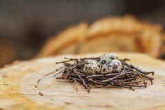 Oeufs de caille dans le nid Photographie stock libre de droits