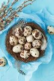 Oeufs de caille dans le nid avec les plumes et le saule Image stock