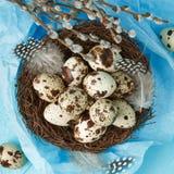 Oeufs de caille dans le nid avec les plumes et le saule Photographie stock libre de droits