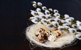 Oeufs de caille dans le nid avec le saule de chat photo stock