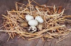 Oeufs de caille dans le nid de paille Image stock