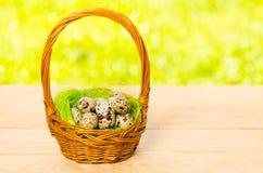 Oeufs de caille dans le panier en osier pour Pâques Image libre de droits