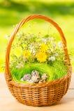 Oeufs de caille dans le panier en osier pour Pâques Photo libre de droits