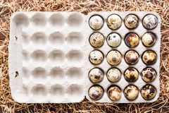 Oeufs de caille dans une boîte et une paille sur une table en bois Image stock
