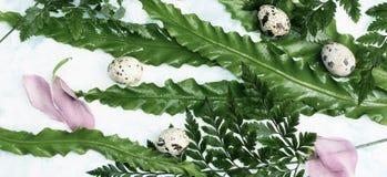 Oeufs de caille de Pâques et pétales roses sur les feuilles vertes Photographie stock libre de droits