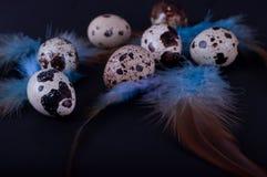 Oeufs de caille de Pâques sur un noir Photo libre de droits