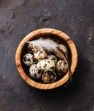 Oeufs de caille frais Photographie stock