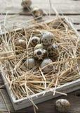 Oeufs de caille Pâques Photos libres de droits