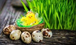 Oeufs de caille pour Pâques Photo libre de droits