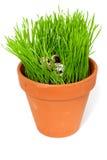 Oeufs de caille sur une herbe verte Photographie stock libre de droits