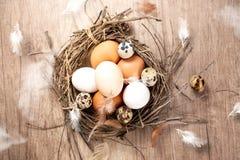 Oeufs de différents oiseaux dans rustique dans le nid photographie stock libre de droits
