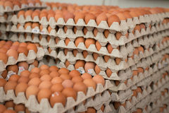 Oeufs de ferme de poulet dans le paquet Photographie stock libre de droits