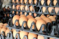 Oeufs de ferme de poulet dans le paquet qui a préservé pour la vente Photographie stock libre de droits