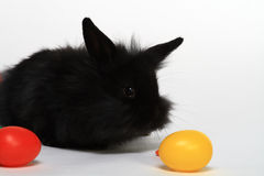Oeufs de lapin et de jouet de chéri Image libre de droits